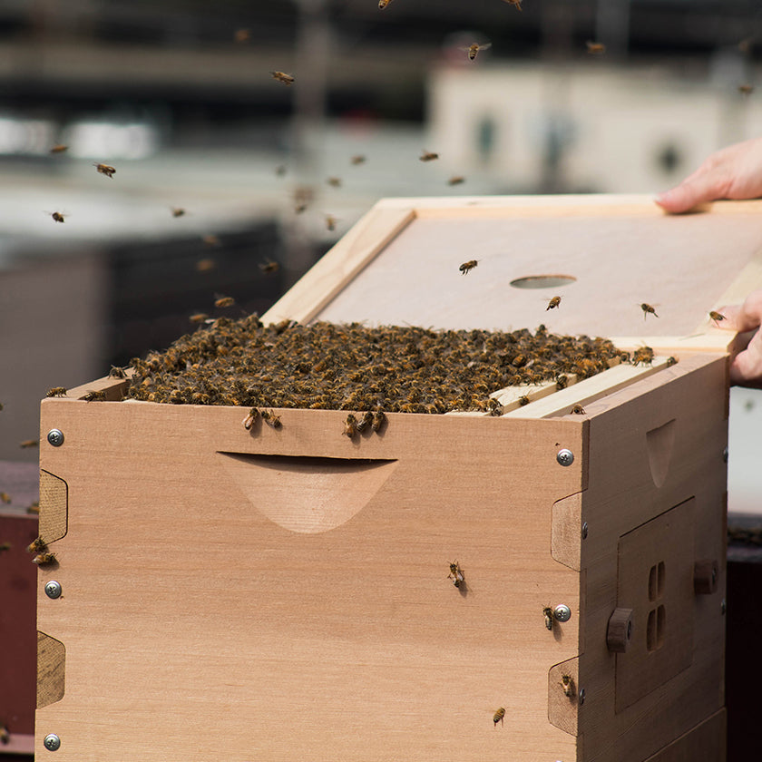 beehives and beekeeping supplies for sale free shipping bee built