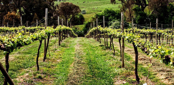 Classy cold climate wines from the foothills of the Snowy Mountains tumbarumba