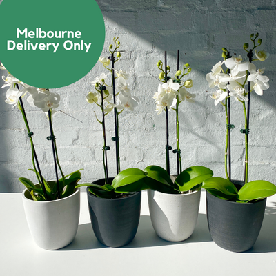 LIVE PLANT DELIVERY - ORCHIDS