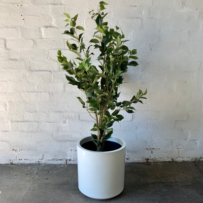 Artificial Small Ficus Tree