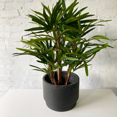 Artificial Raphis Palm Tree | Short