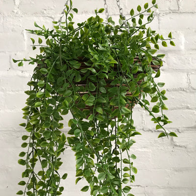 Artificial Hanging Ruscus Plant