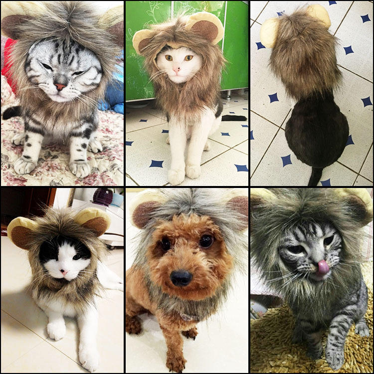 Pet Dog Cat Hat Puppy Costume Lion Mane Wig Halloween Party Dress Up With Ears | Edlpe