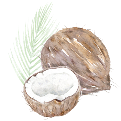 //cdn.shopify.com/s/files/1/2024/5685/files/coconut.png?v=1588936670