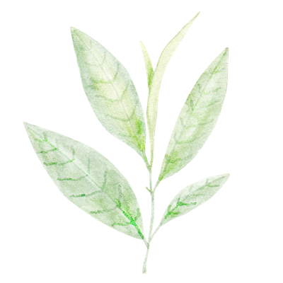 //cdn.shopify.com/s/files/1/2024/5685/files/tea_leaf.png?v=1588931294