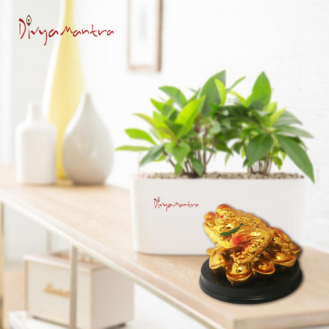 Divya Mantra Feng Shui King Money Toad Three Legged Frog on Ingots For Prosperity Financial Business Good Luck - Divya Mantra