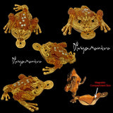 Divya Mantra Feng Shui Vastu King Money Toad Three Legged Frog With Coin For Wealth Luck Happiness Success & Financial Gains, Good Charm, Office, Home Decor Gift Collection Item / Product - Golden - Divya Mantra