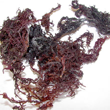 Purple Sea moss organic wild crafted from St.Lucia