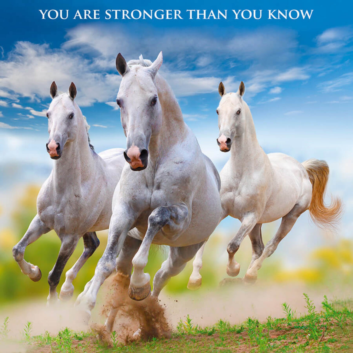 Inspiration Cards - Horses