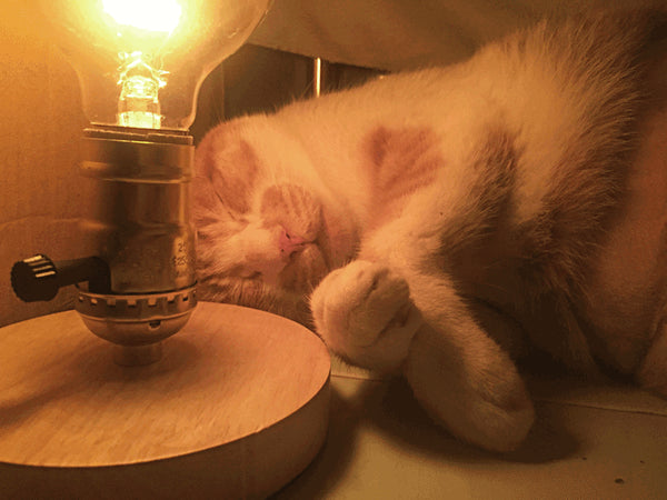 yellow cat sleeps around the wood table lamp