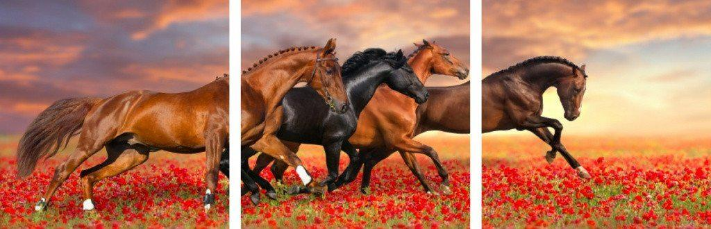 MacJac Art 3-Panel VINYL Horses Theme Wall Art Photography Prints Model AL-41694