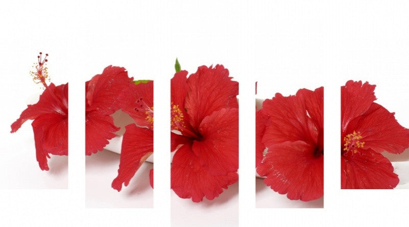 MacJac Art 5 Panel CANVAS Red Flowers Theme Wall Art Photography Prints Model 5PC-AL-41699