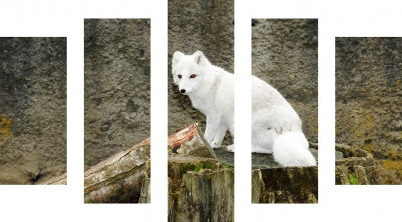 MacJac Art 5 Panel CANVAS White Arctic Fox Theme Wall Art Photography Prints Model 5PC-AL-41748