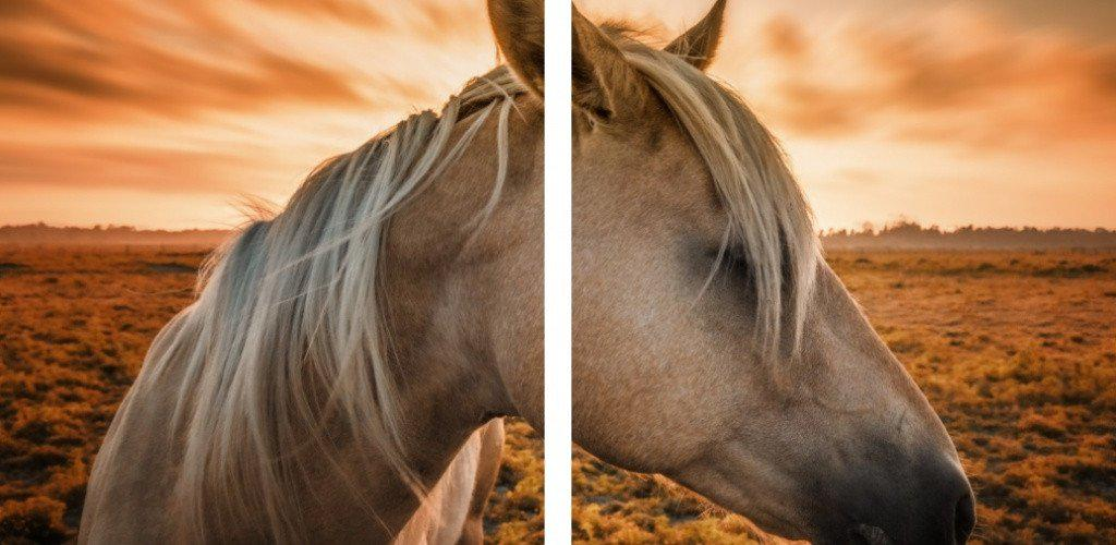 MacJac Art 2-Panel VINYL Horse Theme Wall Art Photography Prints Model AL-417139