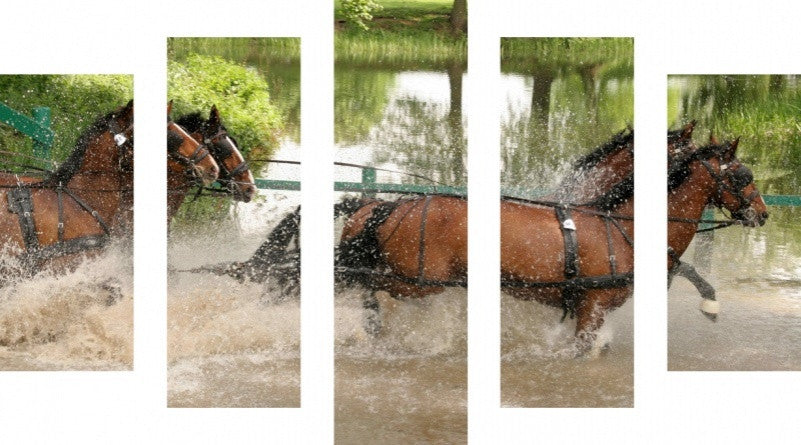 MacJac Art 5 Panel CANVAS River Dance Horses Theme Wall Art Photography Prints Model 5PC-AL-0189
