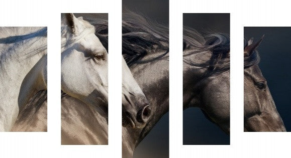 MacJac Art 5 Panel CANVAS Horses Theme Wall Art Photography Prints Model 5PC-AL-41655