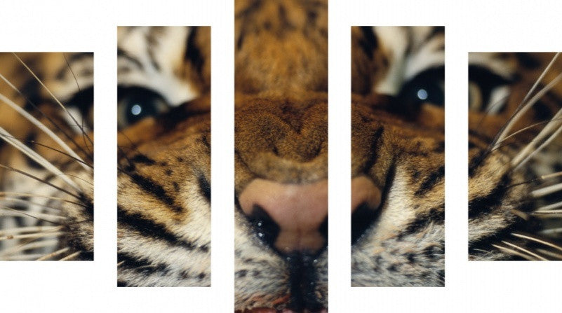MacJac Art 5 Panel METAL Tiger Theme Wall Art Photography Prints Model 5PC-AL-0336