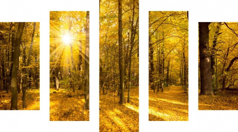 MacJac Art 5 Panel CANVAS Gold Autumn Tree Landscape With Sun Theme Wall Art Photography Prints Model 5PC-AL-41746