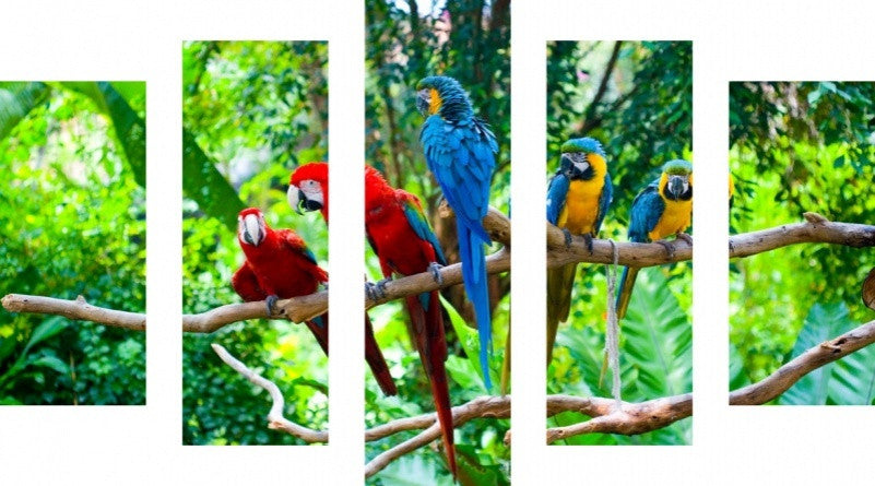 MacJac Art 5 Panel CANVAS Macaw Theme Wall Art Photography Prints Model 5PC-AL-0359