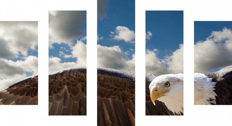 MacJac Art 5 Panel CANVAS Bald Eagle Flying Theme Wall Art Photography Prints Model 5PC-AL-41787