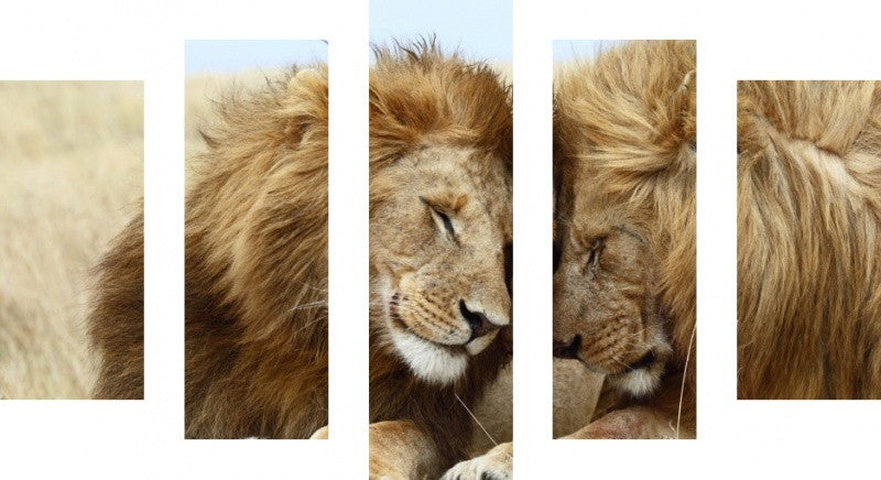 MacJac Art 5 Panel CANVAS Lion Theme Wall Art Photography Prints Model 5PC-AL-41689