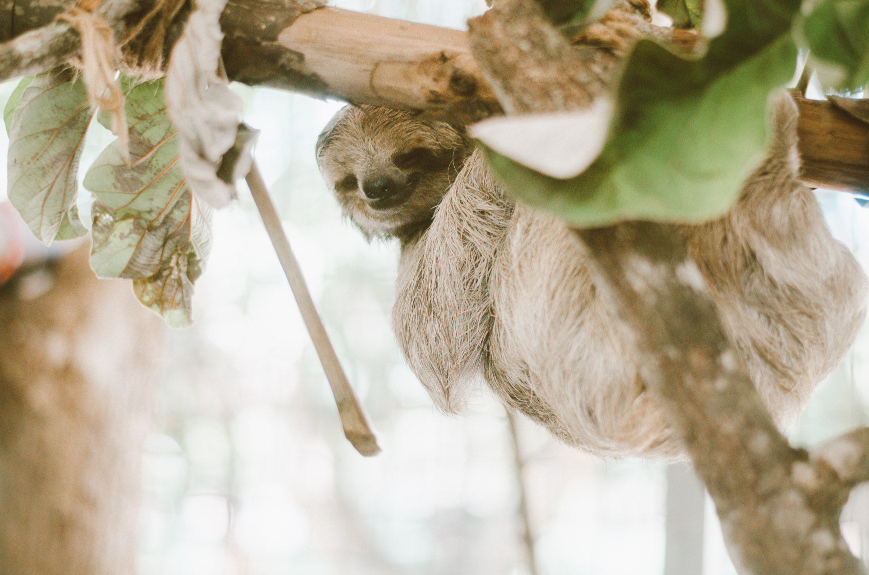 sloth in a canopy
