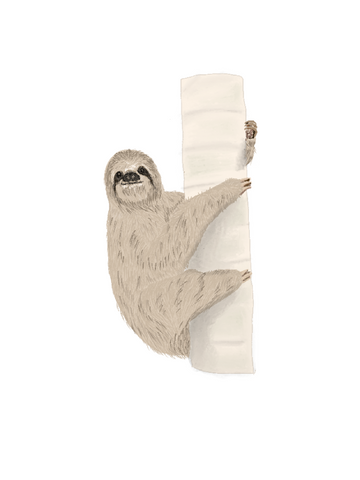 brown throated sloth illustration