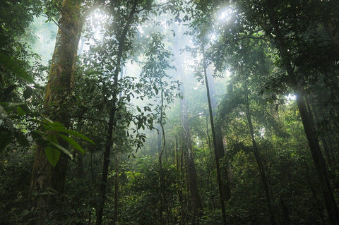 sunlight beaming through rainforest
