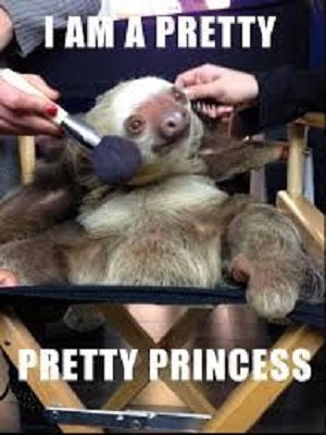 Baby sloth getting makeup put on face