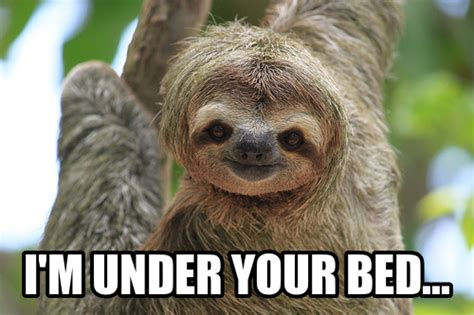 Sloth looking directly into camera on tree