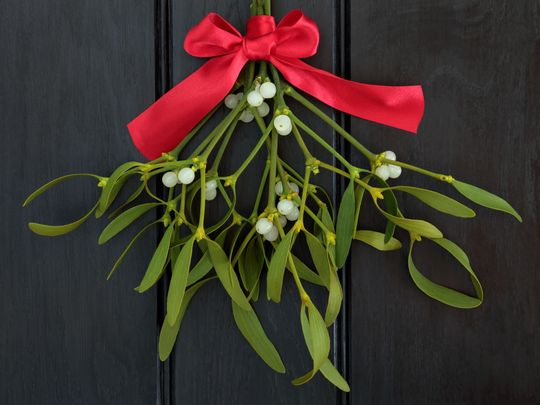 Four Things You Probably Didn't Know About Mistletoe