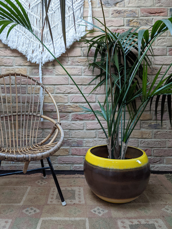 Freida large indoor plant pot, brown on yellow