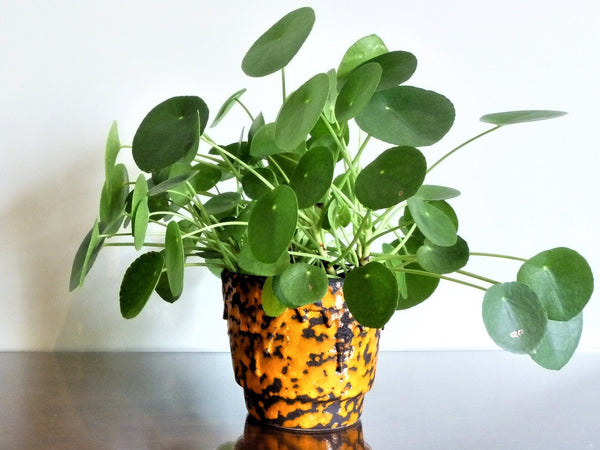 Vintage ES Keramik indoor plant pot, orange and black