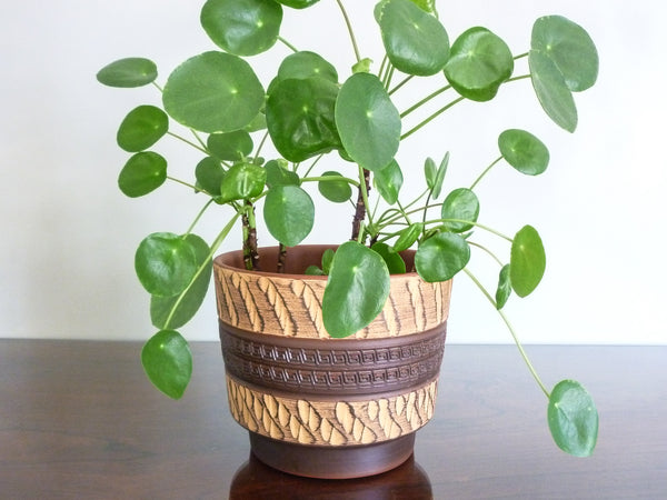 Vitnage Akru indoor plant pot, brown and ochre texture