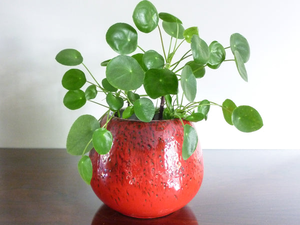 Vintage Waechtersbach indoor plant pot, red and black spotted decoration