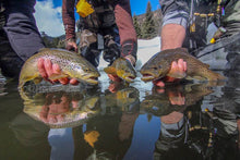 Half  Day Guide Trips - Conejos River Anglers