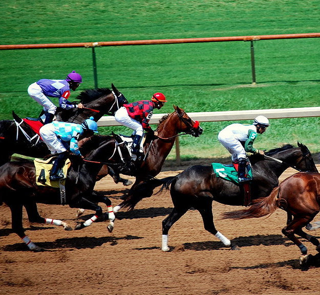 Eight Fun Facts You Didn't Know About Shipping the World's Best Racehorses