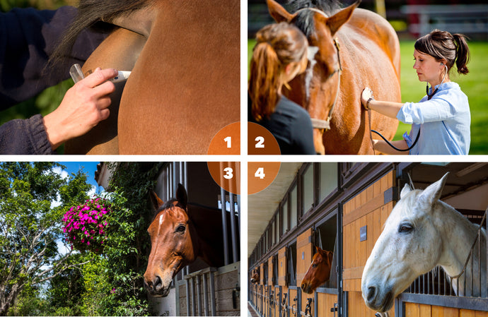 "Back to the Baseline: Four Ways to Learn Your Horse's ""Normal"""