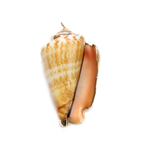 Gold Tone Edge Shell 27x45mm PendantPendant by Halcraft Collection
