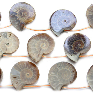 Ammonite Fossil 22mm BeadsBeads by Halcraft Collection