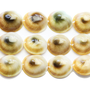 Shiva Eye Shell 17mm BeadsBeads by Halcraft Collection