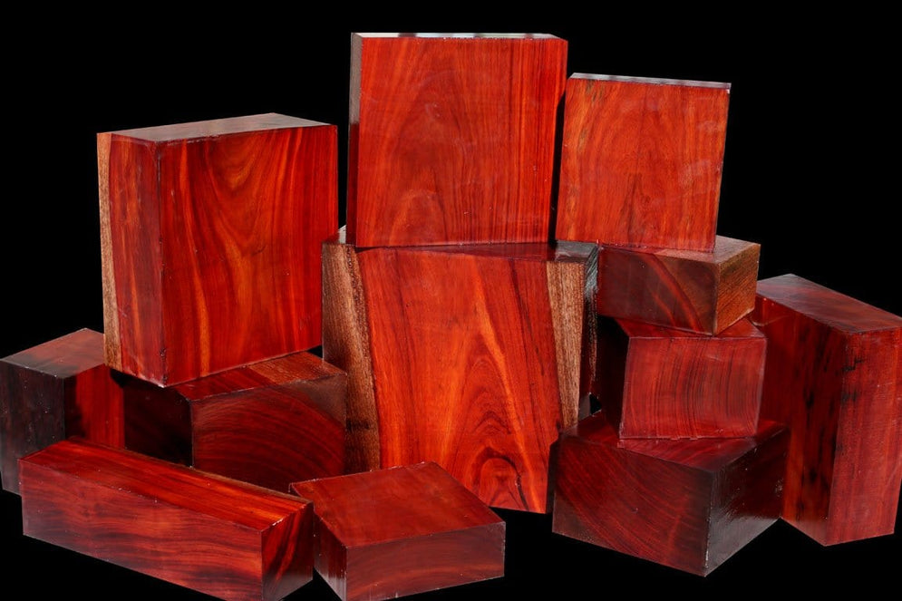 JUST OUT! Exclusive Borneo Rosewood ~ Brand New Species!!