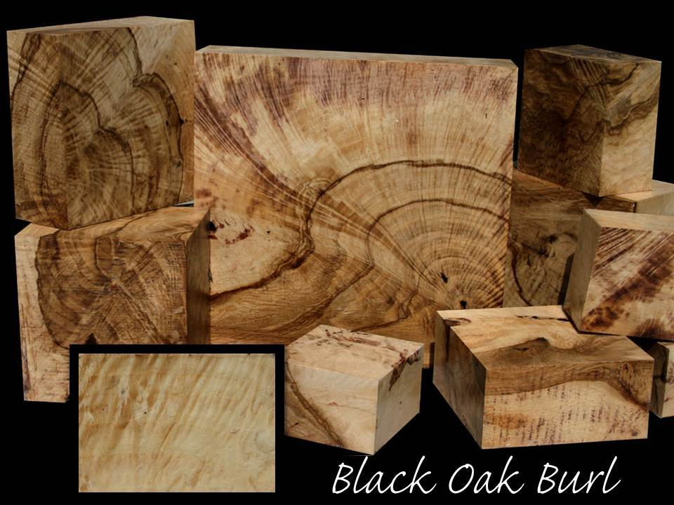 Swirly Burly Black Oak Burl ~ Exquisite!