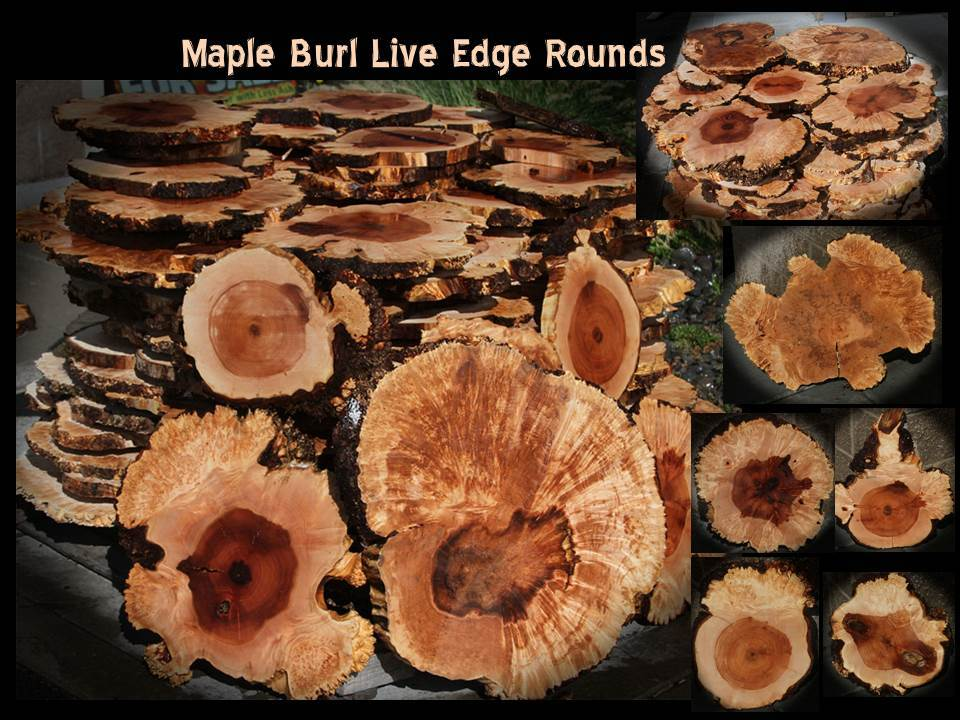 Maple Burl Live Edge Round Slabs ~ One of a Kind!