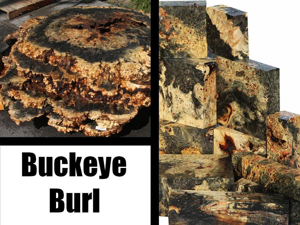 Buckeye Burl – Unique Live Edge Slabs & Turning Blanks