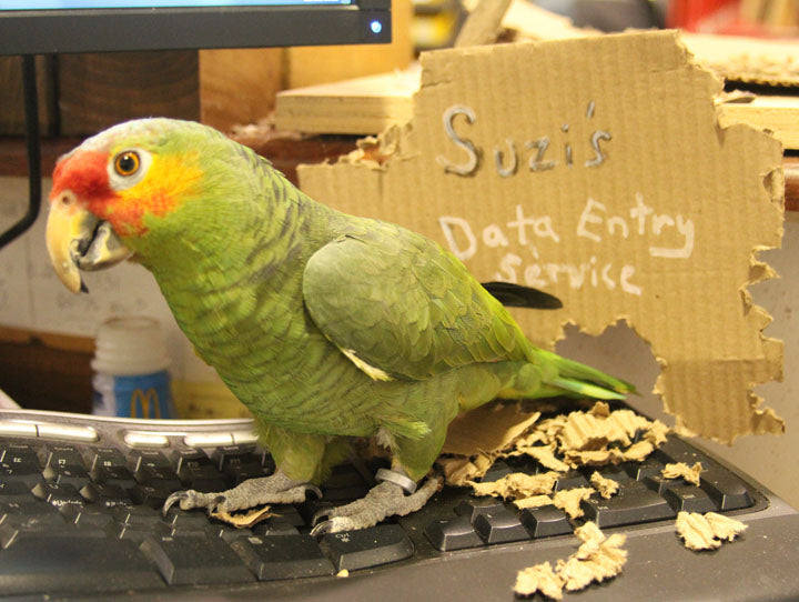 Suzy our Red Lored Parrot