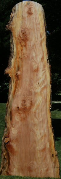 Figured Sitka Spruce Slab