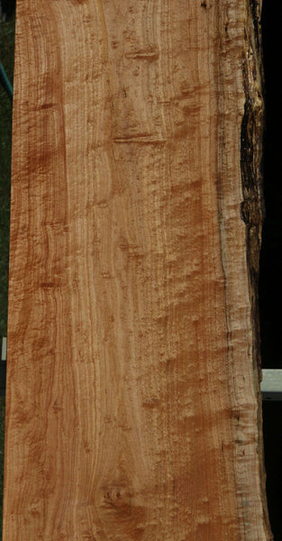 Figured Maple Slab