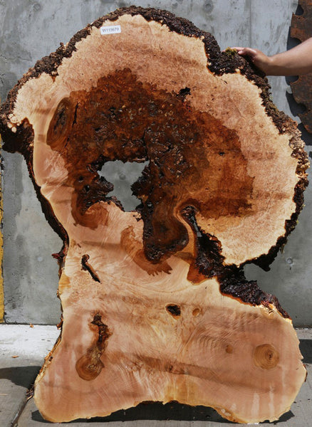 Heart Maple Burl Slab
