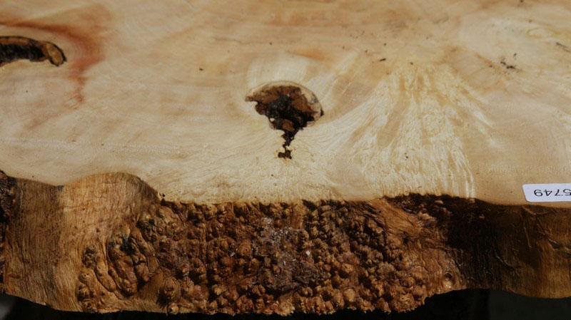 Box Elder Slice